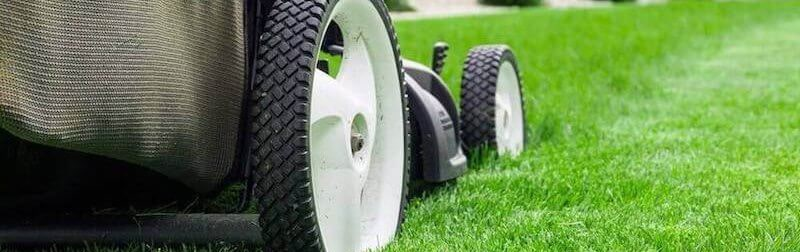 Caring for your winter lawn