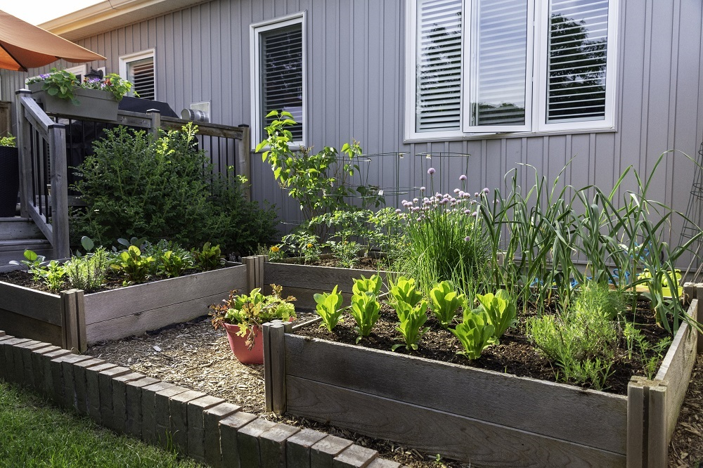 Building a Vegetable Garden in WA (Your Complete In-Depth Guide)