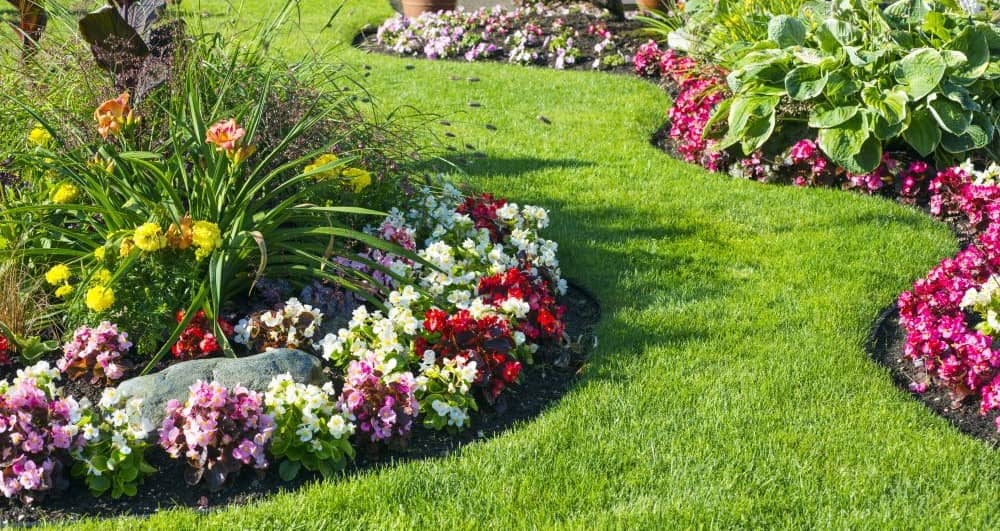 Perennial Ground Covers for Beautiful Edges, Bright Borders, and Bald Spots